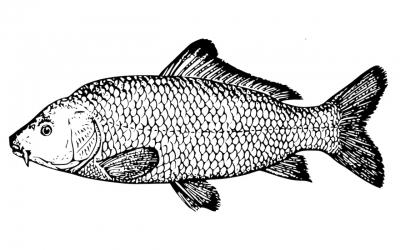 Il finto pesce di Natale